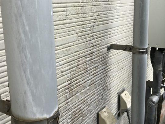 外壁・カビ・コケ 外壁傷み