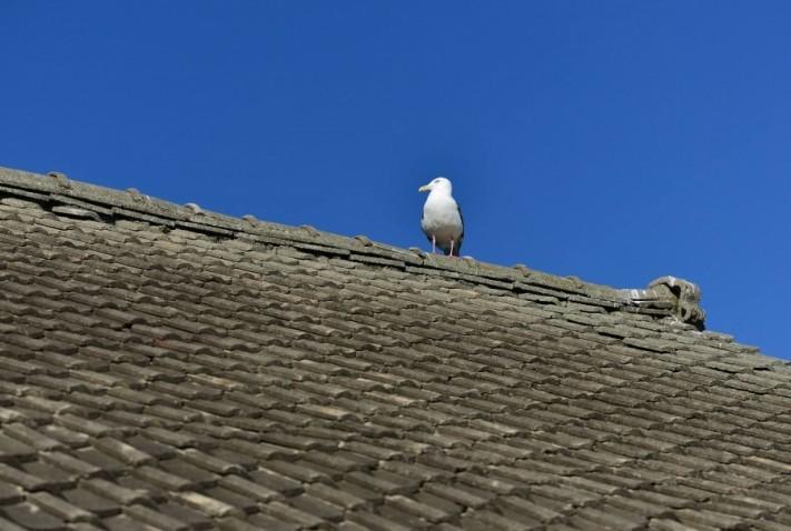 屋根セメント瓦