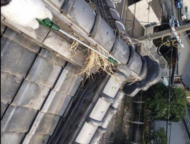 屋根に生えている草