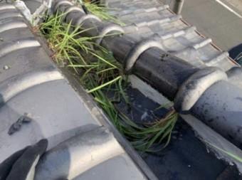 屋根に生えた草
