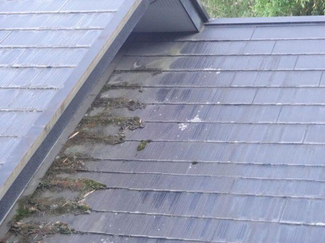 屋根の現地調査の様子