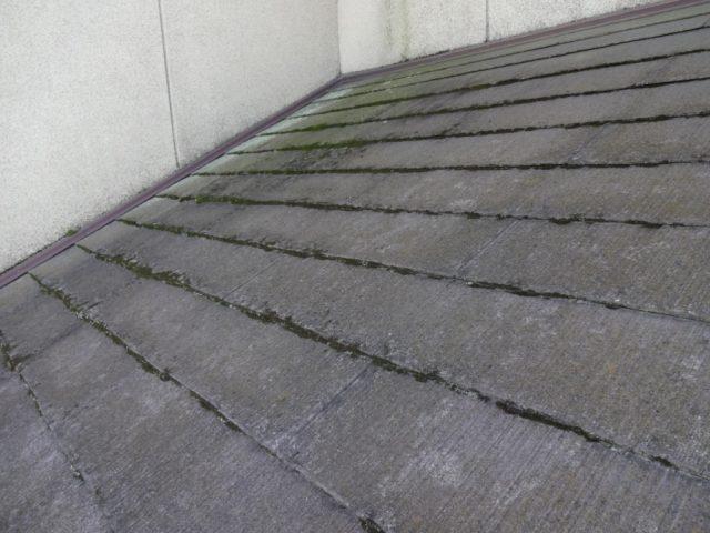コロニアル屋根にコケが生えている様子