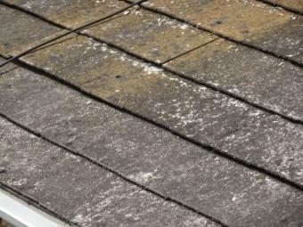 コロニアル屋根のコケの繁殖