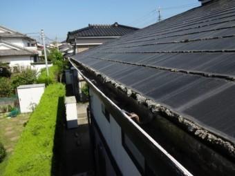 屋根に生えるコケ