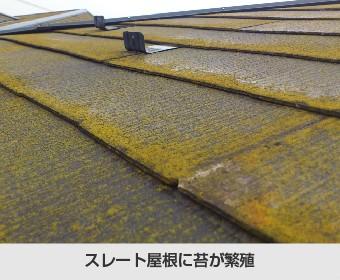 スレート屋根に苔が繁殖